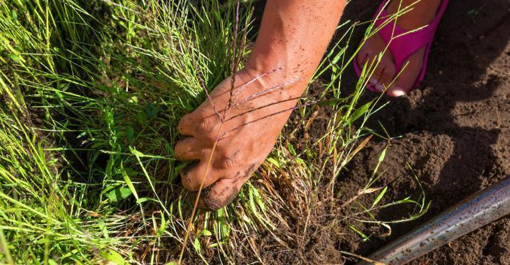 Jardinage: 8 désherbants naturels à préparer soi-même