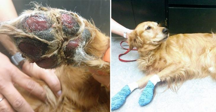 Une vétérinaire met en garde les propriétaires de chien au sujet des dangers de la chaussée chaude