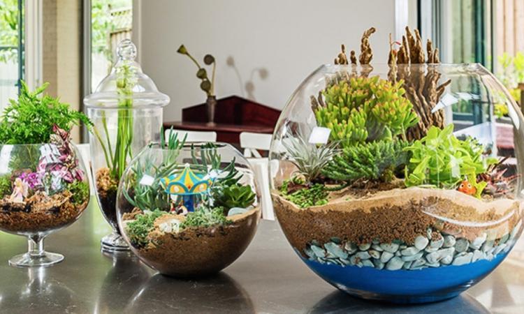 Comment réaliser un jardin miniature! Ils ajouteraient une touche de convivialité dans n'importe quelle maison!