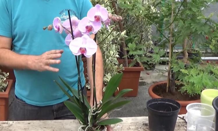 Un expert nous dévoile ses meilleurs conseils pour faire refleurir une orchidée!